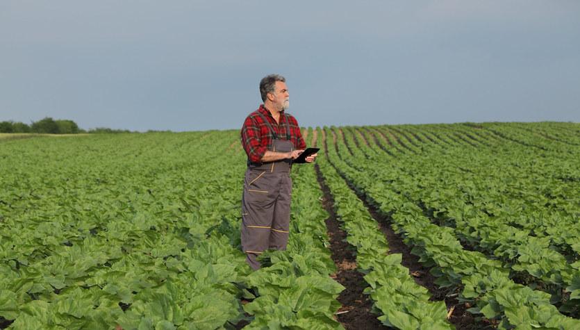 Rolnicy z milionowymi długami. Średnio na blisko 70 tys. zł