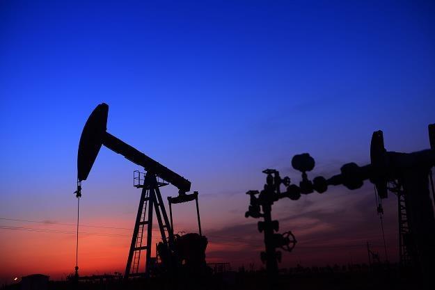 Ropa będzie drożeć? /©123RF/PICSEL