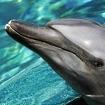 Rosjanie na Krymie przejęli nawet... bojowe delfiny