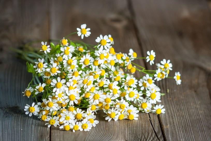 Roślina ta pomaga na wiele dolegliwości, nie tylko bole główy /123RF/PICSEL