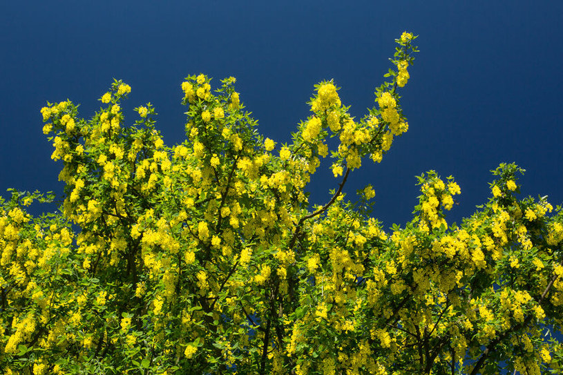 Roślina trująca /©123RF/PICSEL