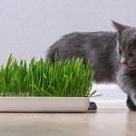 Rośliny bezpieczne i trujące dla kota