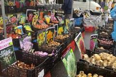 Rośliny do obejrzenia i... zjedzenia. Święto Kwiatów, Owoców i Warzyw w Skierniewicach