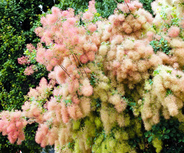 Rośliny do ogrodu, które nie wymagają częstego podlewania