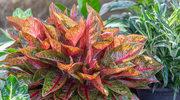 Rośliny domowe dla alergików