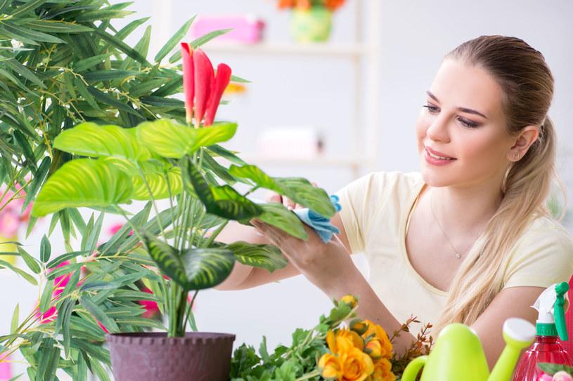 Rośliny domowe zwiększają poziom komfortu w pomieszczeniach i zmniejszają ryzyko zachorowań. /123RF/PICSEL