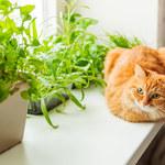 Rośliny doniczkowe bezpieczne dla zwierząt