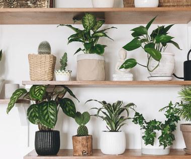 Rośliny doniczkowe dla zapracowanych
