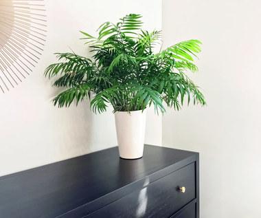 Rośliny doniczkowe do zadań specjalnych