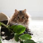 Rośliny doniczkowe przyjazne zwierzętom
