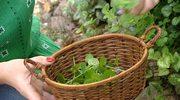Rośliny jadalne w ogrodzie