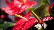 Rośliny, które oczyszczą powietrze w twoim mieszkaniu