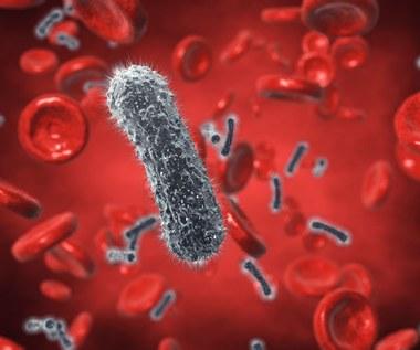 Rośliny, które oczyszczą twoją krew z toksyn