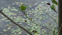 Rośliny, które oczyszczają dla nas wodę