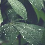 Rośliny, które oczyszczają powietrze z toksyn