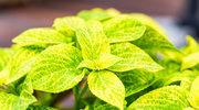 Rośliny, które odstraszą owady