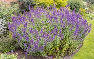 Rośliny, które odstraszają komary. Posadź w ogrodzie lub w donicach na balkonie i tarasie