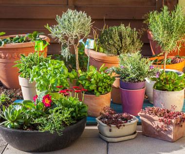 Rośliny, które pomogą nam pozbyć się owadów z domu