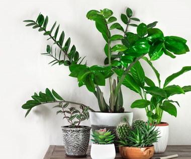 Rośliny, które powinny być w każdym domu