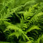 Rośliny, które rosną w cieniu