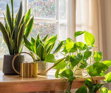 Rośliny, które roztaczają dobrą aurę