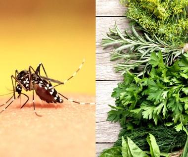 Rośliny, które skutecznie odstraszą komary