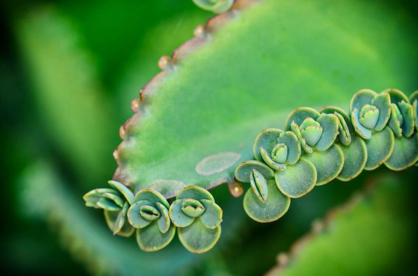 Rośliny, które zjadasz albo z których parzysz herbatki, nawoź tylko naturalnymi nawozami, np. humusem /©123RF/PICSEL