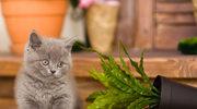 Rośliny, którymi może zatruć się kot