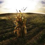 Rośliny modyfikowane genetycznie bez dodatkowych regulacji