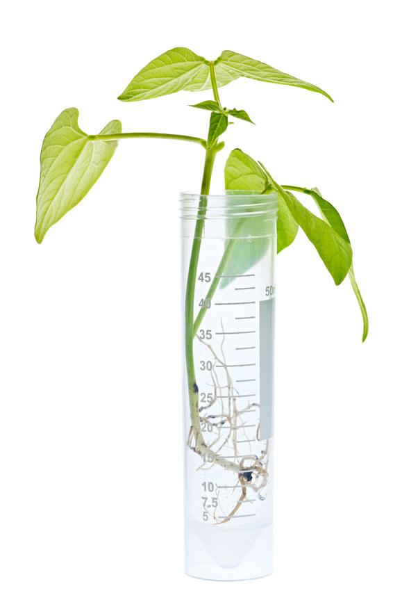 rośliny modyfikowane /© Photogenica