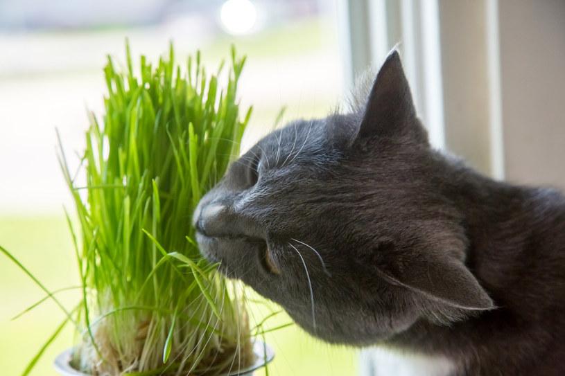 Rośliny mogą wzbudzać kocie zainteresowanie z różnych powodów /123RF/PICSEL