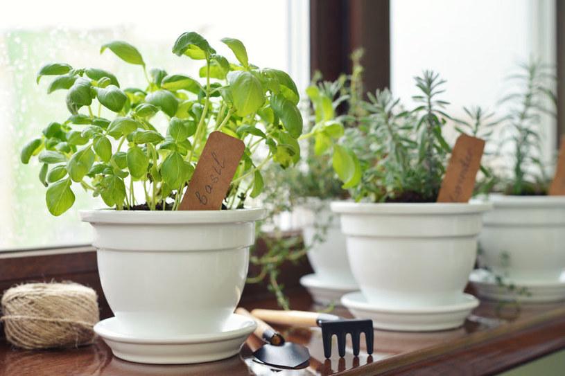 Rośliny na parapecie mogą szybko przemarznąć /123RF/PICSEL