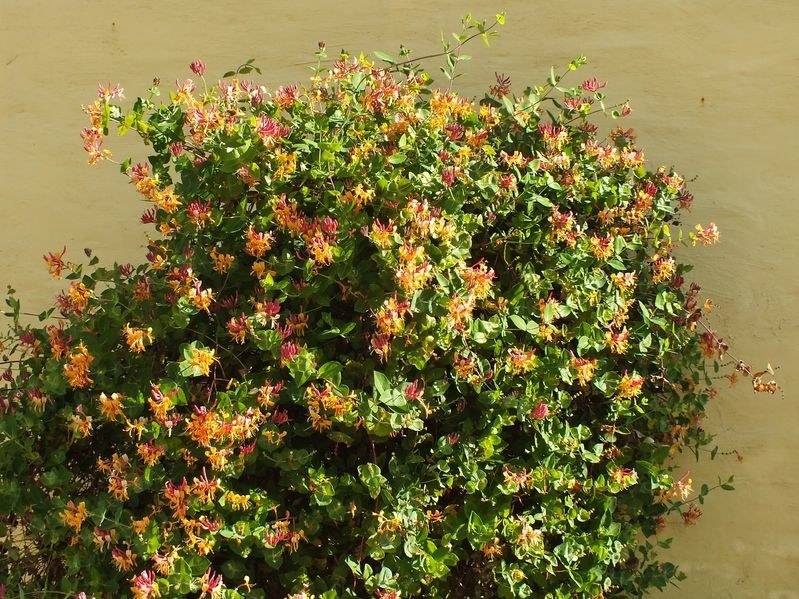 Rośliny na pergole /123/RF PICSEL
