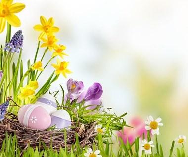 Rośliny na Wielkanoc: Które wybrać? Co warto o nich wiedzieć?