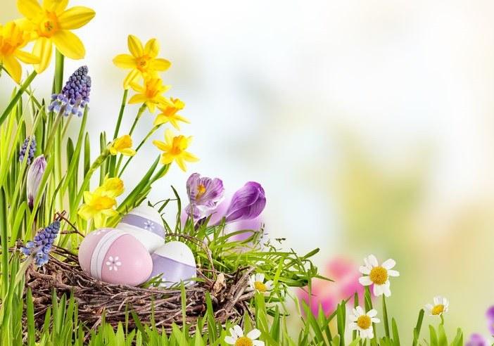 Rośliny na Wielkanoc /©123RF/PICSEL