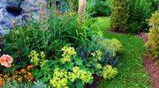 Rośliny, o które nie musimy dbać w ogrodzie