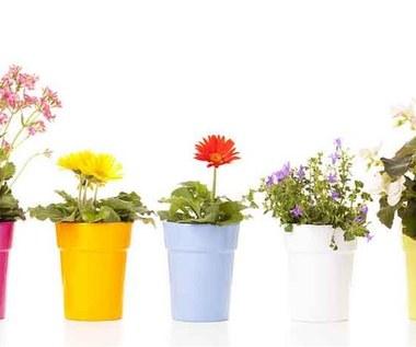 Rośliny oczyszczające powietrze w domu - jakie wybrać?