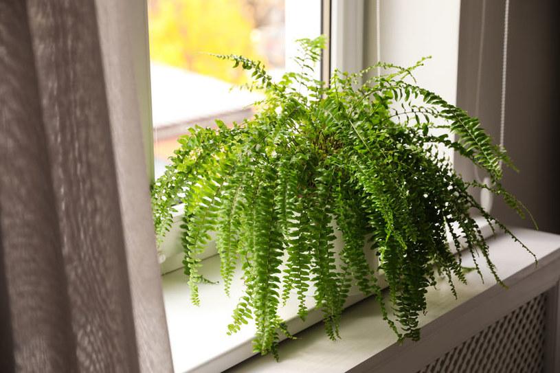 Rośliny odstraszające muchy /©123RF/PICSEL