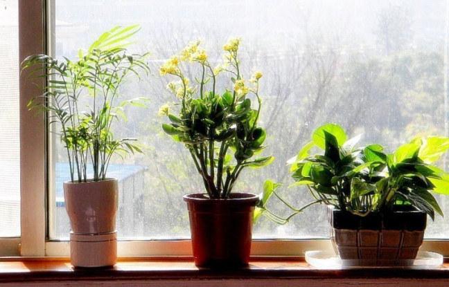 rośliny pomogą ci zasnąć /© Photogenica