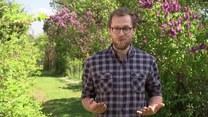 Rośliny przyjazne pszczołom. Jak zasiać łąkę kwietną?