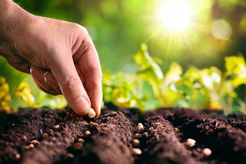 Rośliny trzeba odpowiednio wcześnie zasadzić /123RF/PICSEL