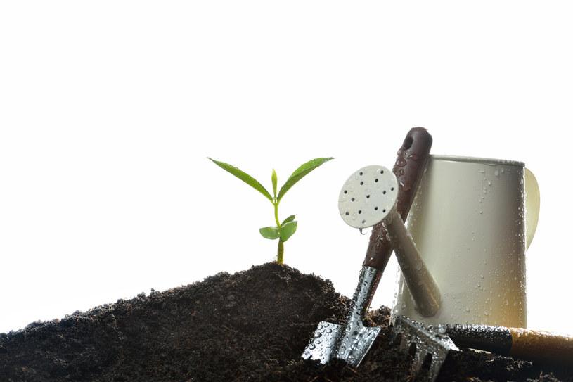 Rośliny trzeba podlewać /123RF/PICSEL