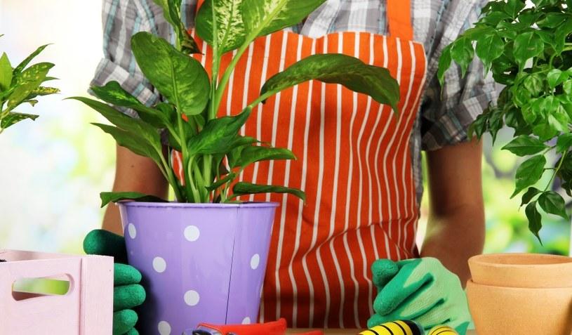 Rośliny trzeba regularnie nawozić /123RF/PICSEL
