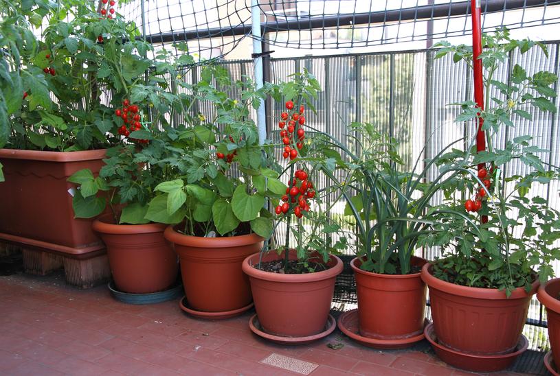 Rośliny ustaw w miejscach słonecznych /123RF/PICSEL