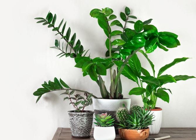 Rośliny w domu /©123RF/PICSEL