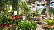 Rośliny w pomieszczeniach. Dlaczego warto je mieć?