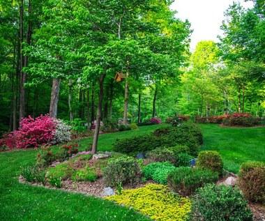 Rośliny zadarniające: Czym są i jaką funkcję pełnią?