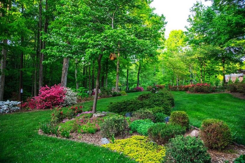 Rośliny zadarniające mogą być efektowną ozdobą w ogrodzie /123RF/PICSEL
