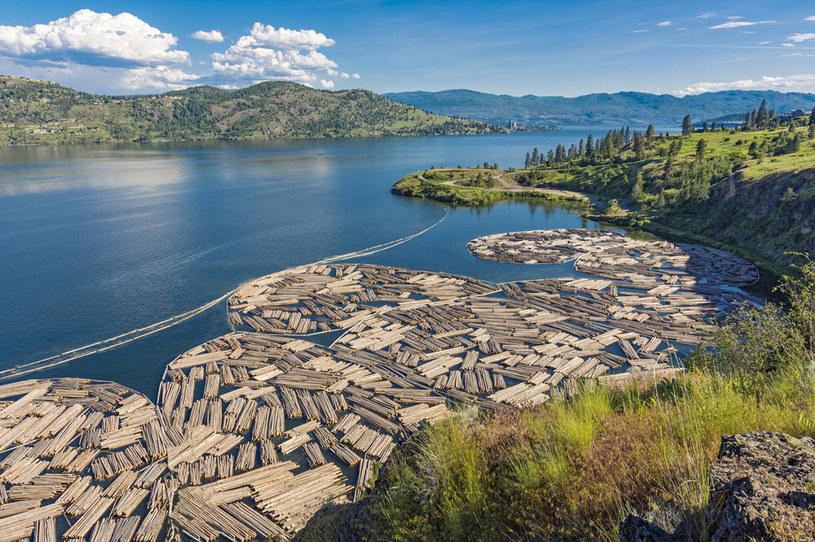Rosnące przez pandemię ceny drewna zachęcają złodziei (zdj. ilustracyjne) /123RF/PICSEL