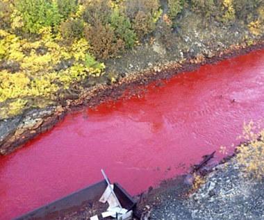 Rosyjska rzeka zmieniła kolor na czerwony